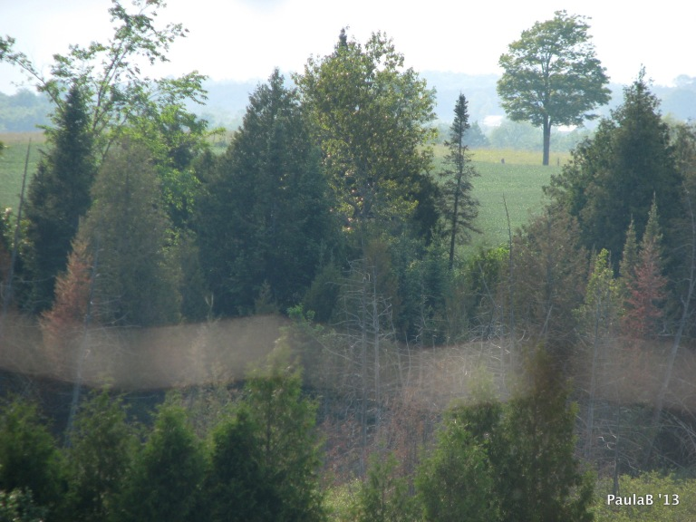 Trees beyond Trees