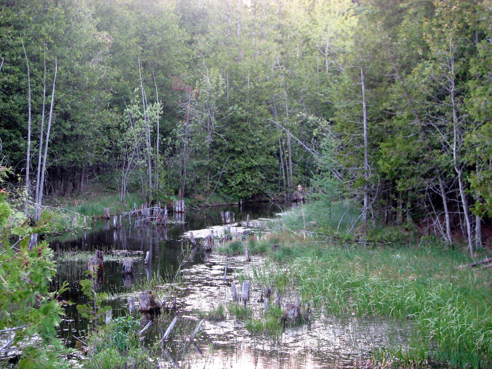 A Valley Stream
