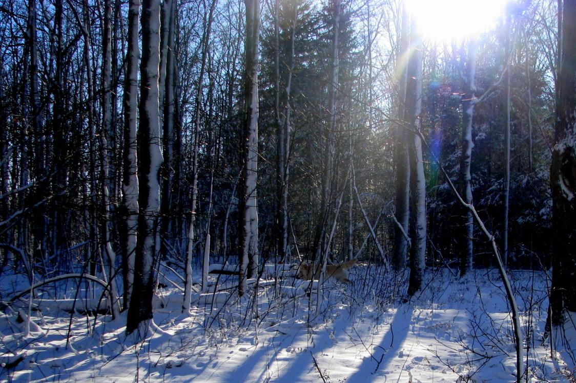 A Run Thru The Woods
