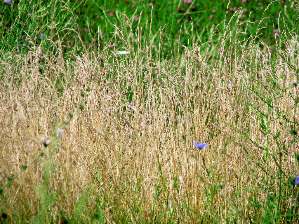 Textures of a Meadow